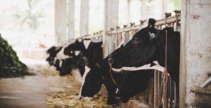 aumentar a producao de leite