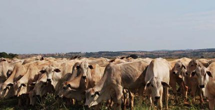 suplementacao de bovinos em pastejo